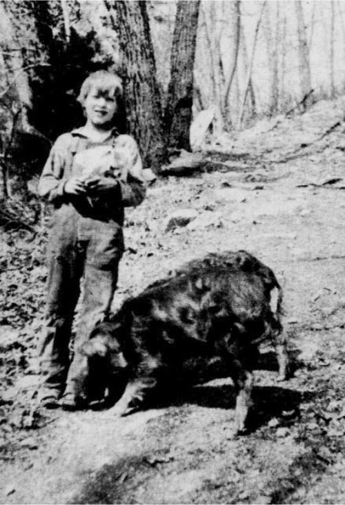 An unidentified Lewis Mountain, Virginia boy with his hogs.