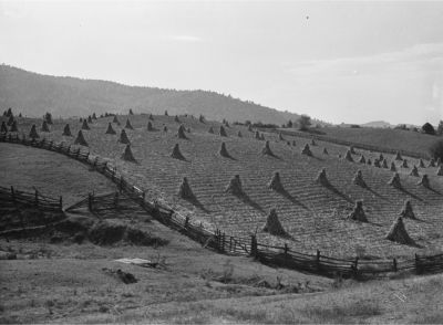 Corn Shocks on a farm near Marion, Virginia in 1940. Photo by Marion Post Wolcott. Courtesy of the Library of Congress.