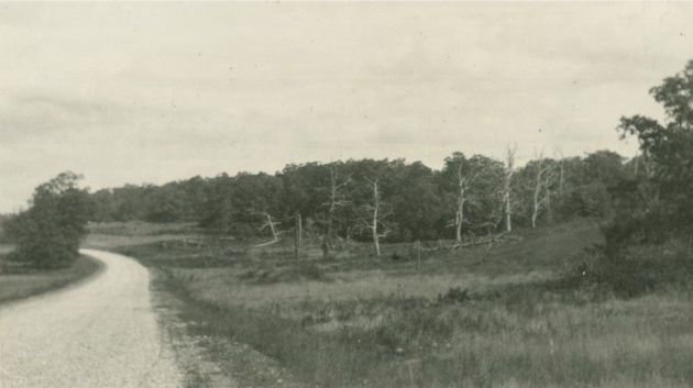 This image shows a view of the Blue Ridge Parkway under development. A clearing is visible on the right side of the road, in which there is a line of dead chestnut trees. There is a wooded area with live trees behind the chestnut trees. The image was taken near station 1024+75 and milepost 155 in Section 1Q of the Blue Ridge Parkway. The photograph was taken in 1937 by Malcolm A. Bird.