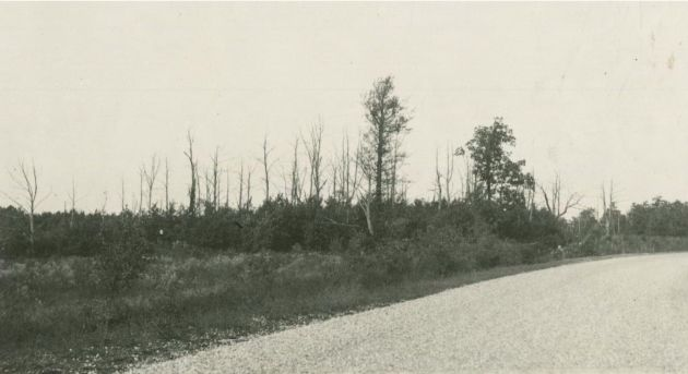 Image of the Blue Ridge Parkway and the surrounding land. There are many dead chestnut trees in the background, and there are new plants growing amongst them. Image taken near milepost 152 and station 886 in section 1Q of the Blue Ridge Parkway. Image taken by Malcolm A. Bird on October 12, 1937.
