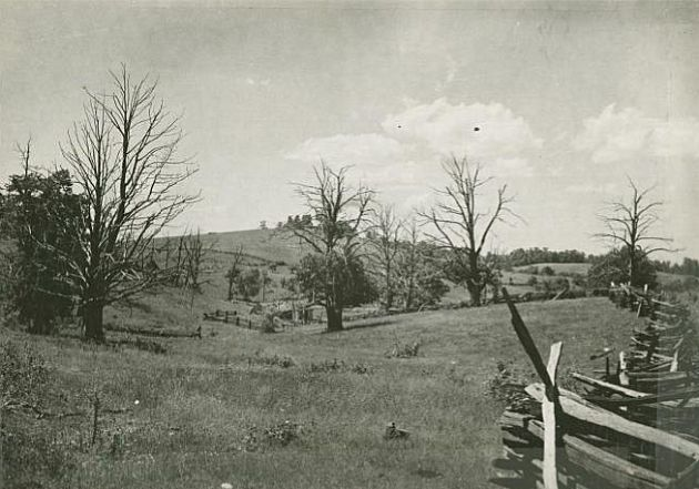Photograph of a pasture as viewed from the side of the Blue Ridge Parkway. Image shows a line of trees, and in the lower right portion of the image is a detail of a fence. Image was taken at milepost 163.1 by in August of 1936, near station 1440 in section 1R of the Blue Ridge Parkway. Taken by A.S. Burns in 1936.